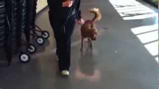 """leave It"" Dog Training Demo At Olde Towne Pet Resort In Sterling, Va"