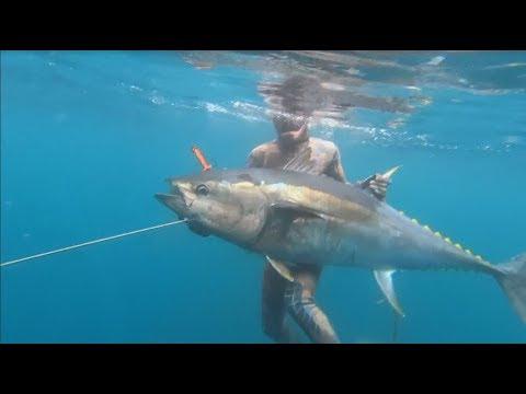 瀕臨絕種黑鮪魚強勢回歸 重現南加州海域【大千世界】藍鰭鮪魚