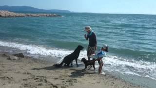 ミランとトイプードルのマカロンと海にいきました。