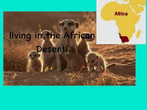 African Animal Information Report Template