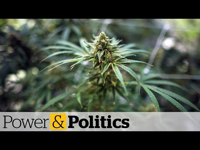 Debate and concerns about pot legalization | Power & Politics