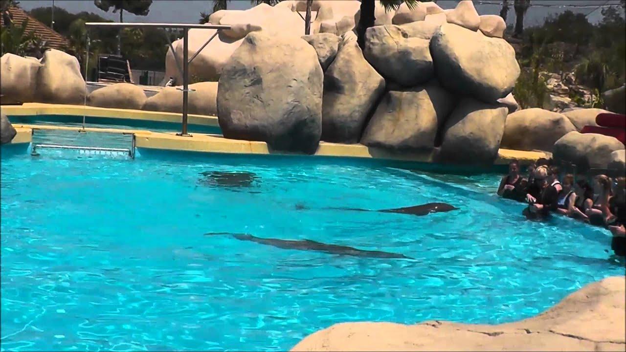 rencontre dauphin marineland avis Niort