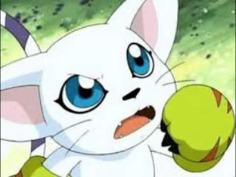 Gatomon And Patamon Digimon Adventure Gato...