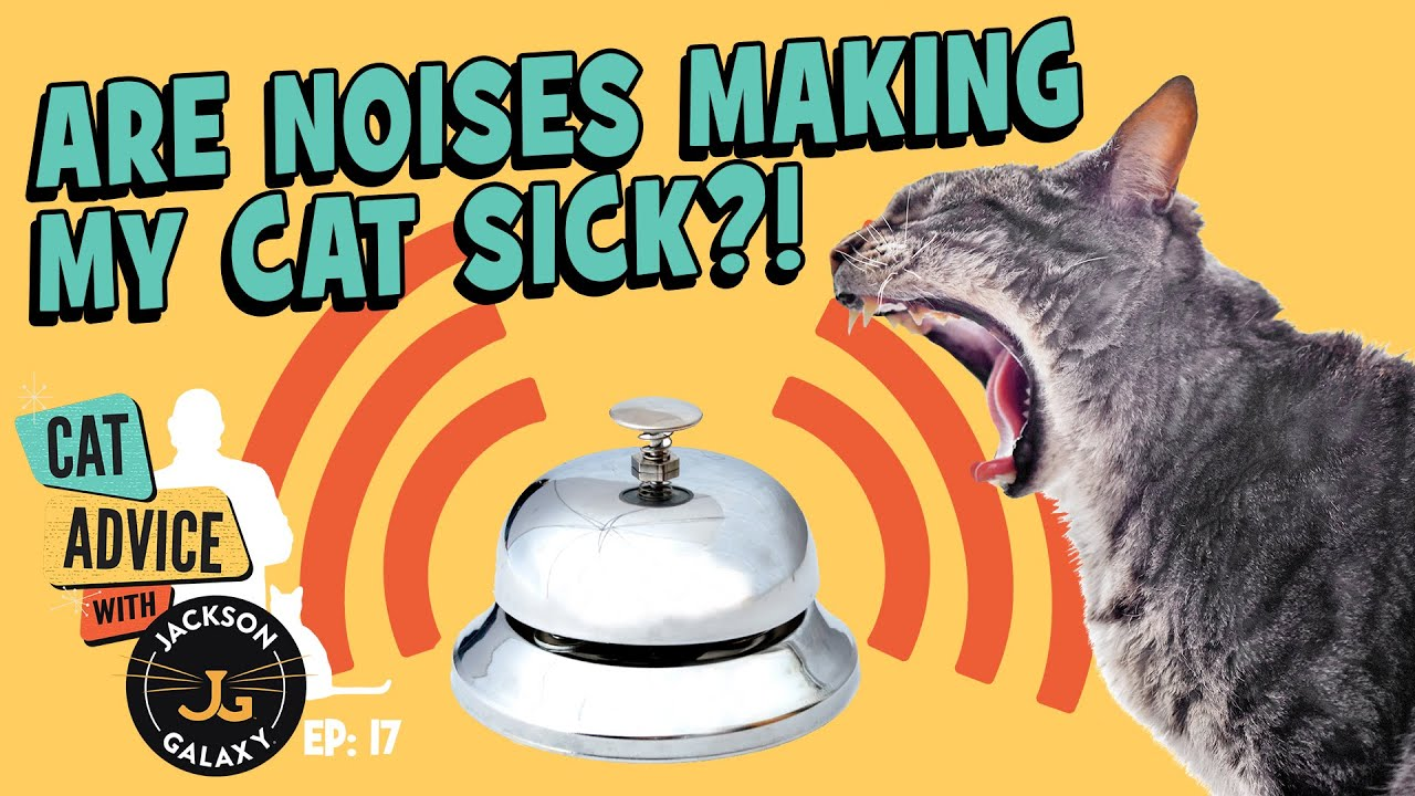 Can Sounds Cause Cats to Have Seizures? YES!