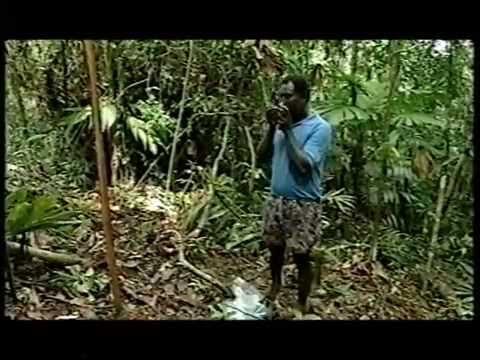 SWIFT  - Green Gold Part I - Solomon Islands.mpg