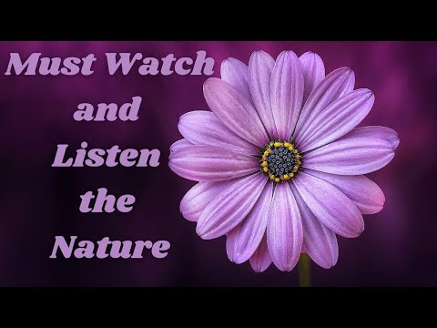 Must watch and Listen the Nature sound of River, waves, Birds, fire, Mountain, Rain, Forest.........