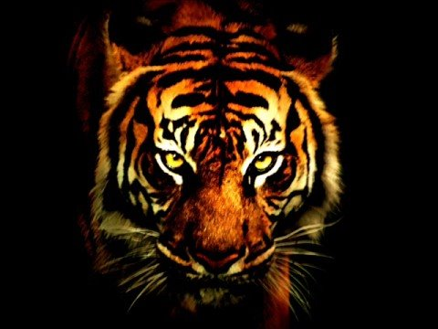 I Of The Tiger