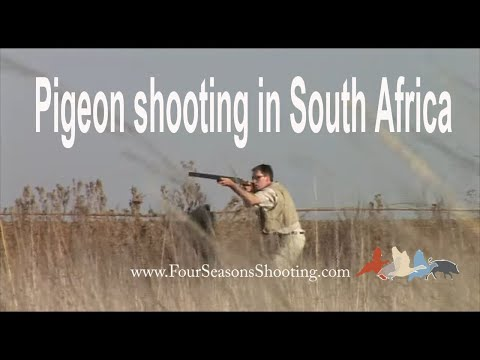 Dove and Pigeon Shooting South Africa £175 per day 2019