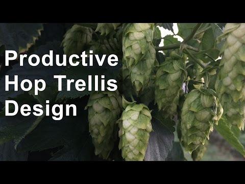 Productive Hop Trellis Design