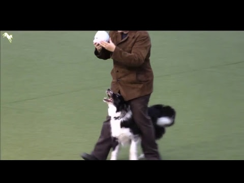 World Dog Show 2017 Freestyle