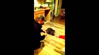 Bandit the raccoon loves malted milk balls!!