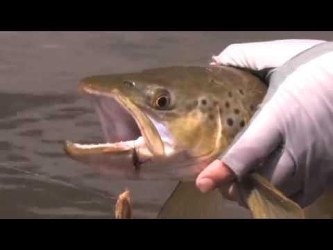 Gavin Hurley Fly Fishing In Tasmania, World Class Fishing...
