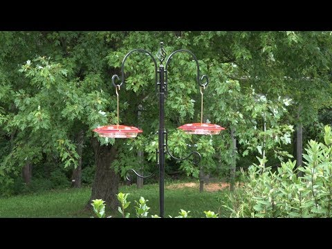Deluxe Bird Feeding Station For All Birds Or Japanese Beetle Traps Or Wasp Traps