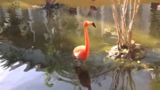 Video Flamingo noise download MP3, MP4, WEBM, AVI, FLV April 2018