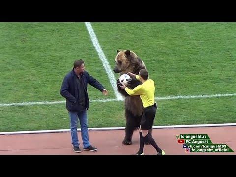 Urso participa em cerimónia de futebol e choca internet