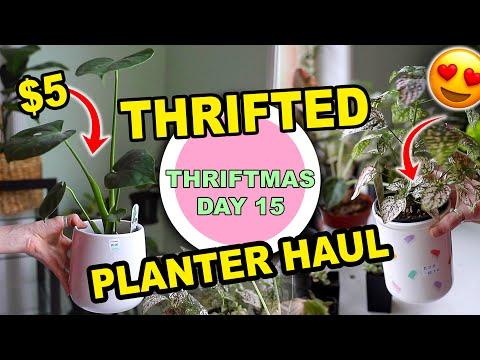 PLANTER POT THRIFT HAUL!!! INDOOR PLANTS & THRIFTED POTS | THRIFTMAS DAY 15