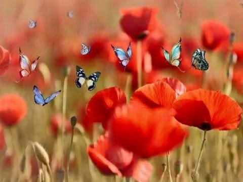 Red Flower Wallpaper Download, Red Fowers Pictures