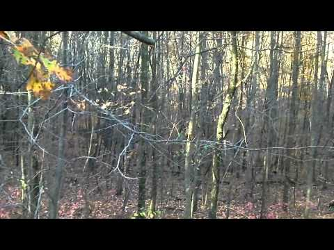 Wayne National Forest Ohio Self Filmed Big Nontypical