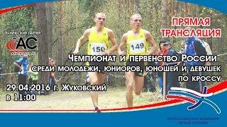 Чемпионат России по кроссу (г. Жуковский)