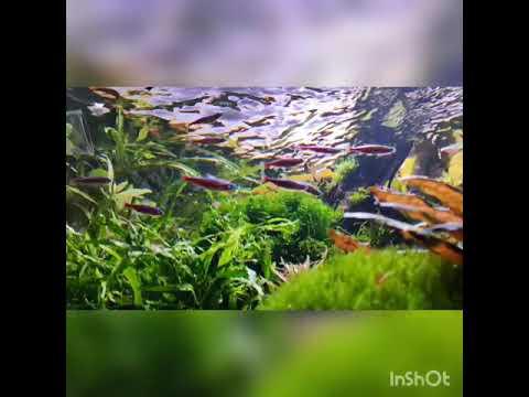 Фильтрация в аквариуме коротко без теории (природный аквариум)