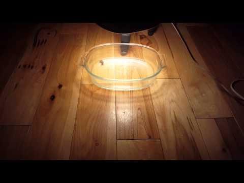 Flea Problem On Wood Floors