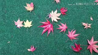 우리아파트 가을풍경