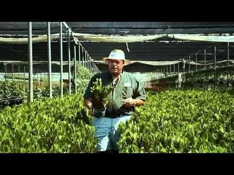 ZZ Plant Care Instructions.avi