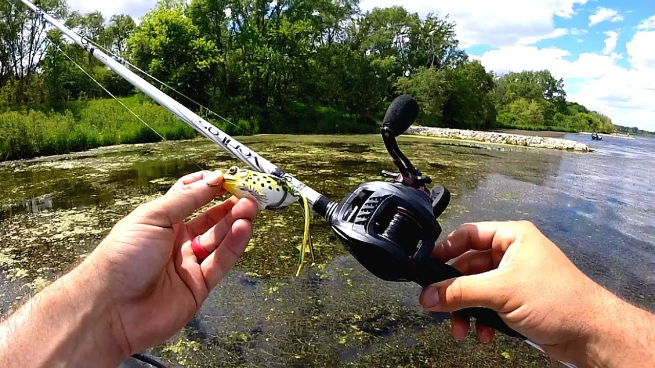 Frog fishing for bass in the grass youtube for Frogs for fishing