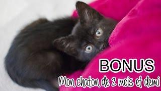 BONUS # Mon chaton de 2 mois et demi