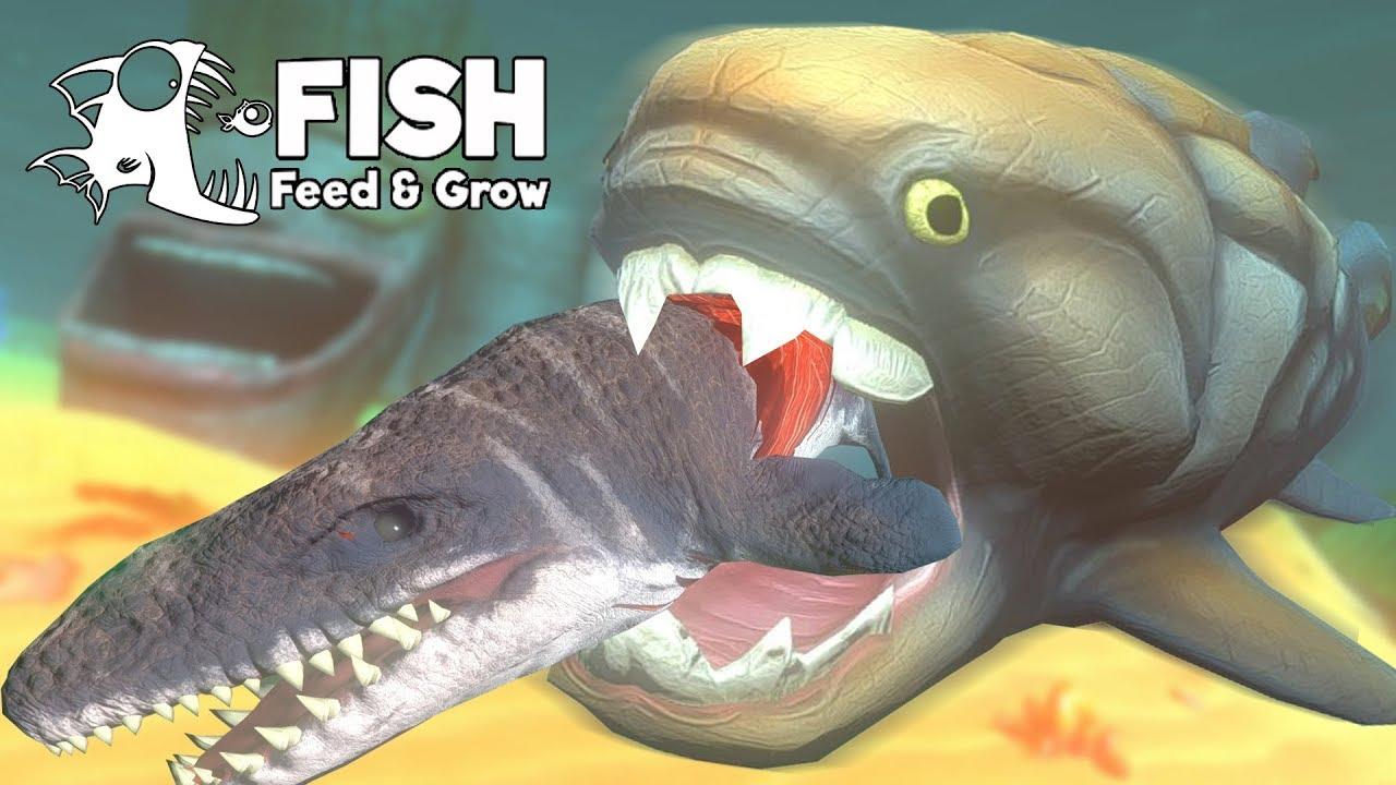 ดังเคิลออสเตียส!! ปลายักษ์หุ้มเกราะดึกดำบรรพ์!!   Fish Feed and Grow #52