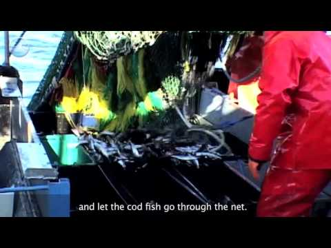 Reducing Bycatch