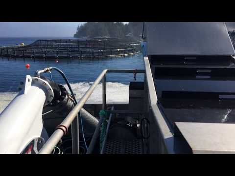 Incidental Catch Separator during salmon harvest at Marine Harvest farm