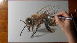 How to draw a 3D bee