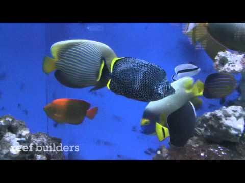 Rare Saltwater Fish In The Aquarium Of Chris Campbell