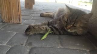 Бой без правил - Кошка и Саранча