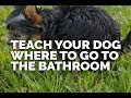 Teach Your Dog Where to Go to the Bathroom