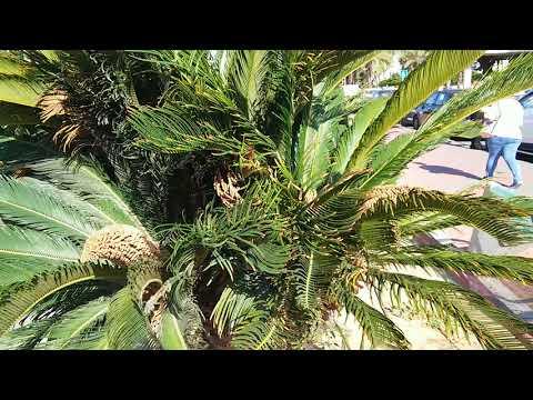 Цветок Пальмы Восхищение Красота