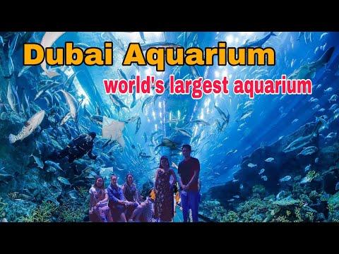 Latest update: Dubai Aquarium Tunel || Dubai Aquarium || relaxation music and video