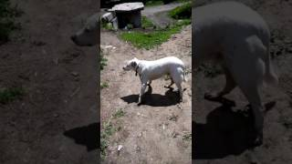 Выгул собак без намордника и поводка
