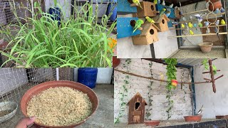 Special Food For Birds Breeding // Healthy Food for Parrot // breeding formula for budgies