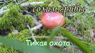 солим грибы простой способ засолки грибов