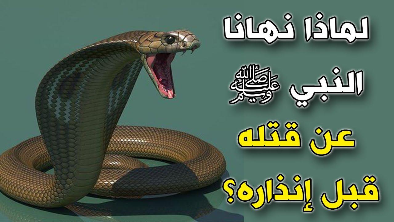 لماذا نهانا النبي ﷺ عن قتل الثعبان قبل إنذاره ستبكي من الاجابة Youtube