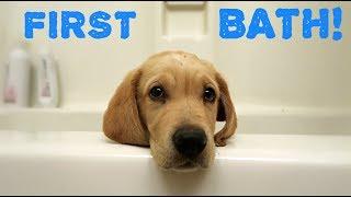 GOLDEN RETRIEVER PUPPIES FIRST BATH!!