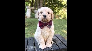 Funny dogs #15