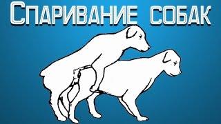 Спаривание собак(Доброго времени суток, дорогие посетители! Спаривание собак – это процедура обязана проходить под присмот..., 2015-07-17T10:13:26.000Z)