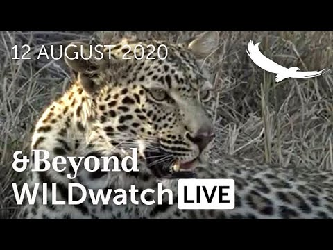WILDwatch Live | 12 August, 2020 | Afternoon Safari | South Africa