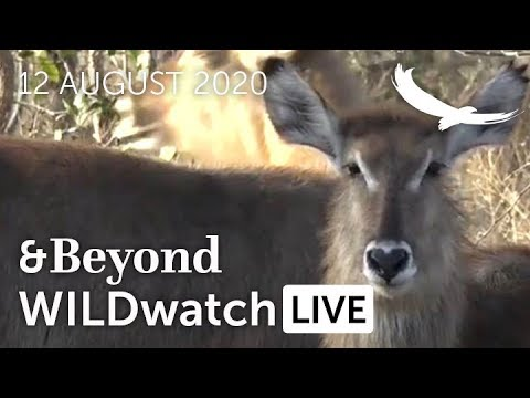 WILDwatch Live |