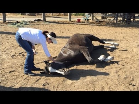 11-Year-Old Sobs Over Her Horses Death After 50 Were Poisoned at Farm
