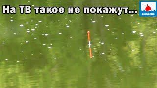 Такое на ТВ не покажут! А мне можно! Вот она настоящая рыбалка общих водоёмов! А под конец я офигел.