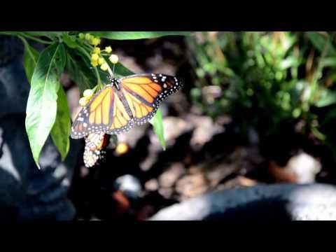 Butterfly Farms, Vista CA